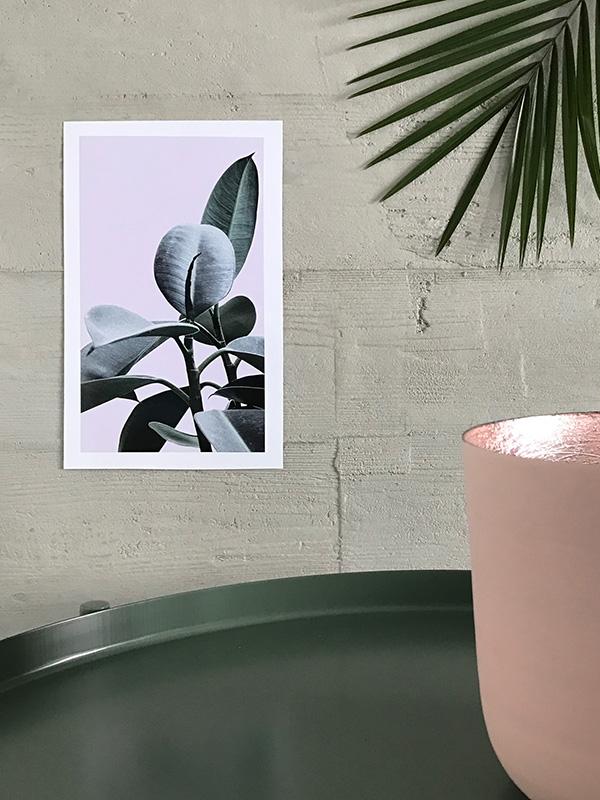 Elixir-Pea-Flower-Lavender-Sage-600